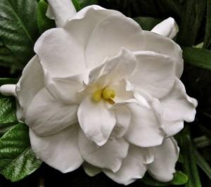 jenn-blooming