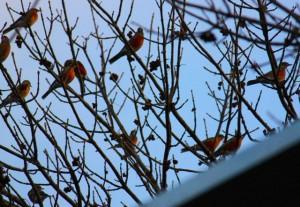 More Birds Today