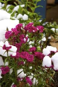 Snow2 2010